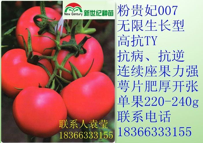 毛粉番茄種子粉貴妃007 1