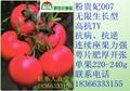 毛粉番茄种子粉贵妃007 1