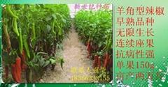 尖椒种子艾格尔种子