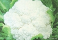 2012 New Crop Fresh Cauliflower