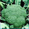 Frozen broccoli,IQF broccoli,Frozen