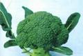 Frozen broccoli,IQF broccoli,Frozen vegetable 4