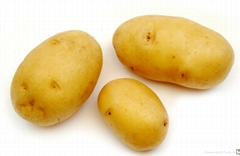 Frozen Vegetable Frozen Holland Potato