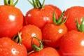 Fresh Chinese Red Tomato
