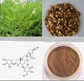 Astragalus Extract 1