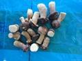 2012 new crop frozen boletus edulis (A