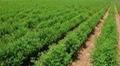 animal feed,guar gum seeds,Soybean Seeds 1