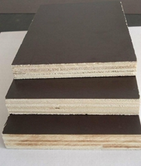 Construction film faced Plywood