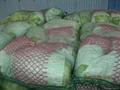 fresh long cabbage