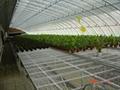 The solar greenhouse 2