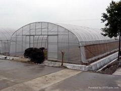 single-span film greenhouse