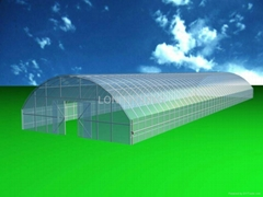 Tunnel Greenhouse for agriculture