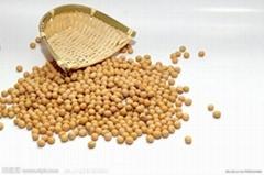 有機黃豆通過有機認証