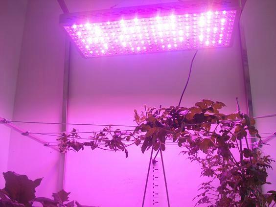 High power 720w full spectrum led grow light for flowering stage 4