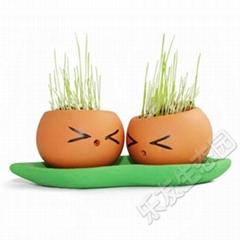 樂藝幸福豆栽培
