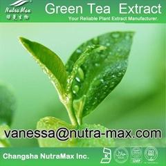 Green Tea P. E. 30% L- Theanine