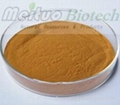 Green Tea Extract - EGCG 1