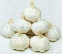 fresh norml/pure  white garlic