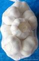 fresh norml/pure  white garlic  2