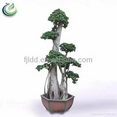 Bonsai Tree Sale