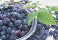 FD IQF blueberry