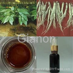 Panax Ginseng Root Oil