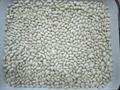 white kidney beans 4