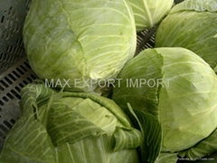 Fresh cabbages from Poland
