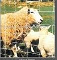 sheep fence 1