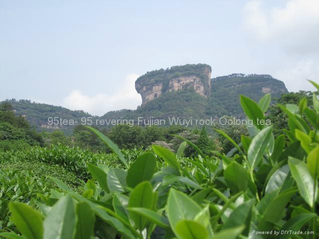 Fujian Wuyi Oolong tea, Da hong pao  200.00g/can 4