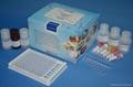 伏马毒素检测试剂盒 1