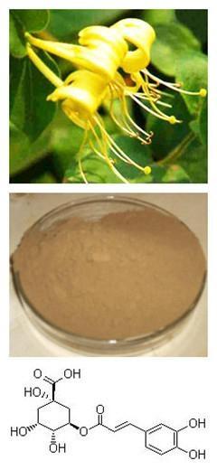 Chlorogenic Acid 1