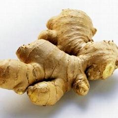 Ginger Root P.E.
