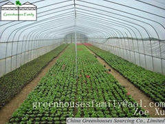 Hot Galvanizded High Tunnels Greenhouses from China