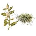 Herbal cigarette raw materials