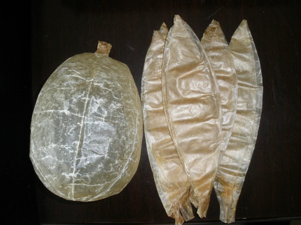 dried hog bladders 1