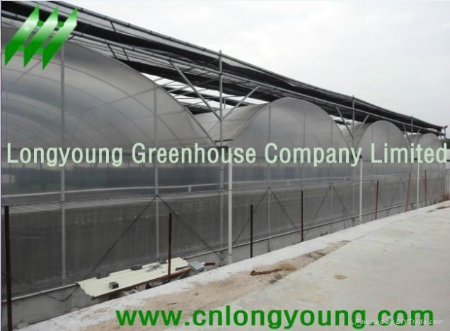 Plastic Film Multi-Span Greenhouse 1
