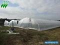 Plastic Film Multi-Span Greenhouse 3