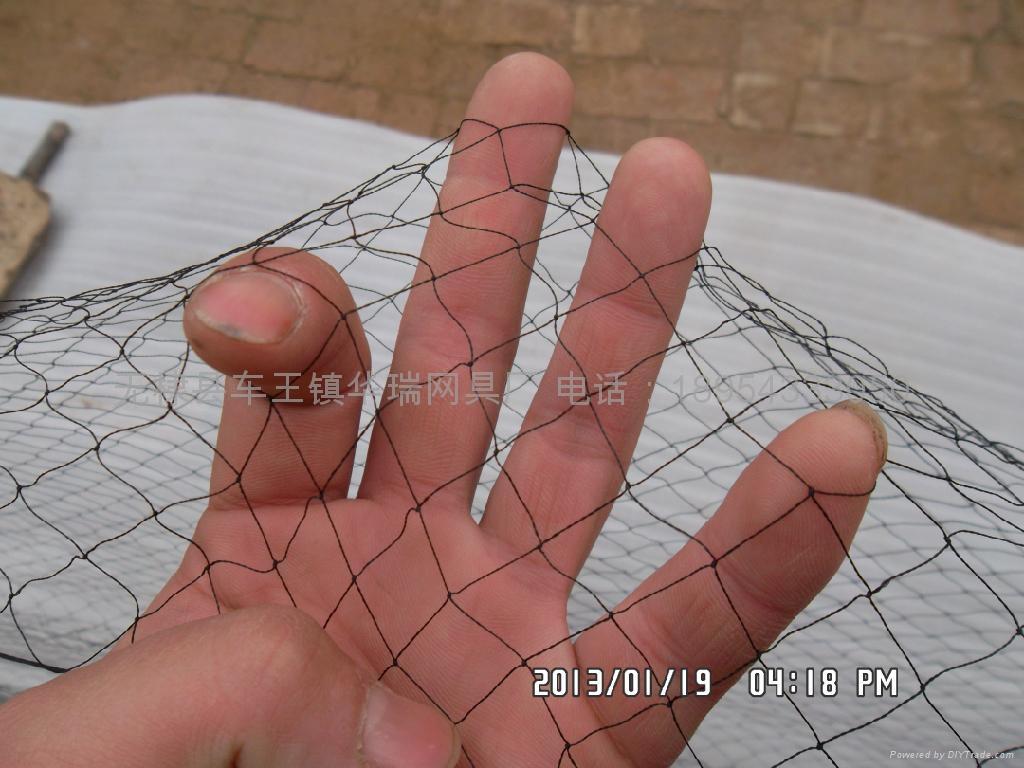Anti bird net and the sparrow 4