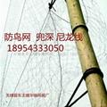 bird-nets 2