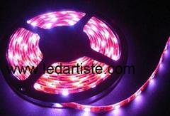 RGB,SMD5050 Flex LED Strip with Crystal Epoxy Waterproof
