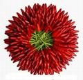 Chilli Red 1