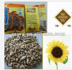 roasted sunflower kernel