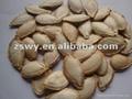 pumpkin seeds 1