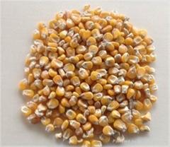 Animal Feed Yellow Corn,