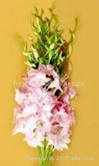 Fresh orchids cut flower : juri peach