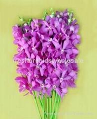 Thai orchids flower for sale