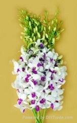 Fresh cut orchids flower wholesale