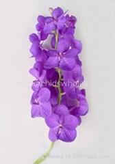 Fresh cut orchids flower