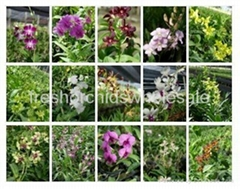 orchids plants